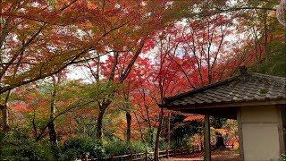 2018 11/18 亀山公園の紅葉 ~愛媛県大洲市柚木~