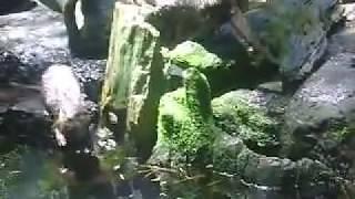 video cewek mandi di sungai wow bgt