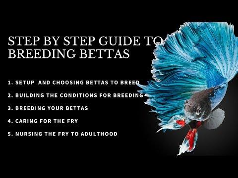 Breeding Betta fish SIMPLE GUIDE