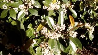 Call berry bush honey bee stan even Florida Januar