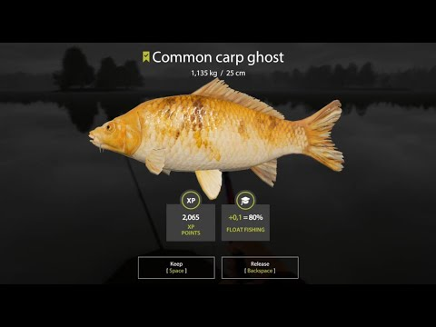 russian-fishing-4.-common-carp-mirror-en-amber-llake-y-más-capturas.