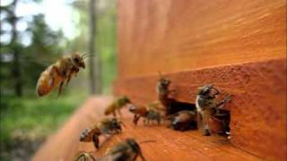 Backyard Beekeeping Part 5(S1:E5): Fanning
