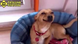 Приколы про животных в хорошем качестве  Смотреть смешное видео про животных832