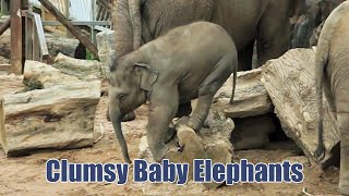 Clumsy Baby Elephants