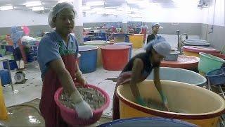 Креветки в Таиланде производят рабским трудом (новости)