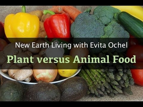 Plants versus Animals as Food Choices [New Earth Living ep.