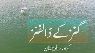 Dolphins of Ganz | Gwadar | Balochistan | Pakistan | Vlog # 22 |
