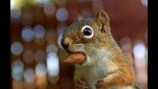 Top Funny Squirrel Videos Compilation 2018 [BEST OF] - Cute Animals