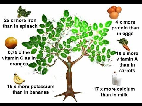 benefits of moringa leaf
