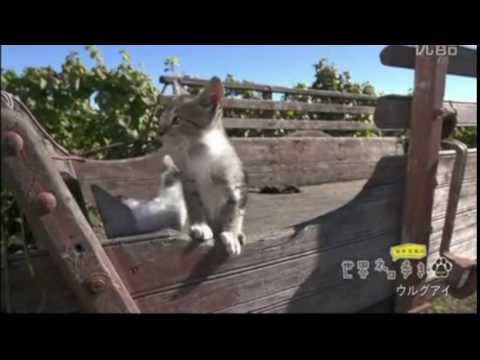 【悶絶注意】可愛すぎる子猫がにゃー! in Uruguay:Cute cat meows in Uruguay
