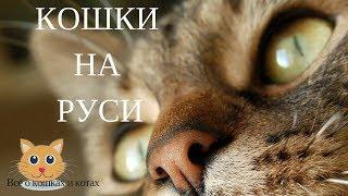 Кошки на Руси. Несколько историй на Руси посвящённых кошке.