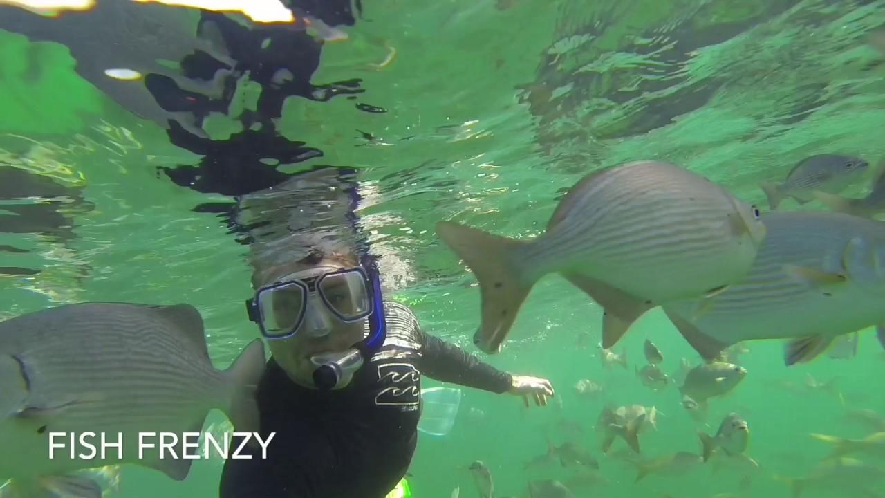 Swimming in fish feeding frenzy youtube for Feeding frenzy fish