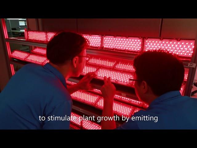 """Unique """"White"""" Growth Lights"""