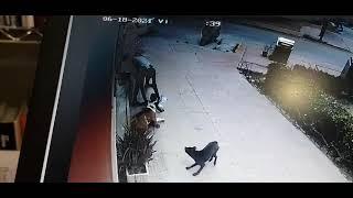 Una veterinaria salva la vida a una niña de 2 años atacada brutalmente por un perro.