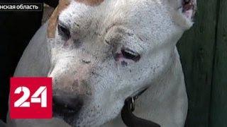Бездомных собак возьмут на контроль - Россия 24
