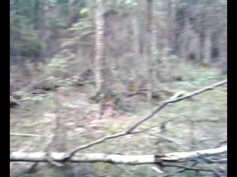 Nukitsamehe mets