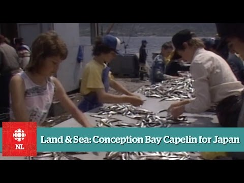 Land & Sea: Conception Bay Capelin for Japan