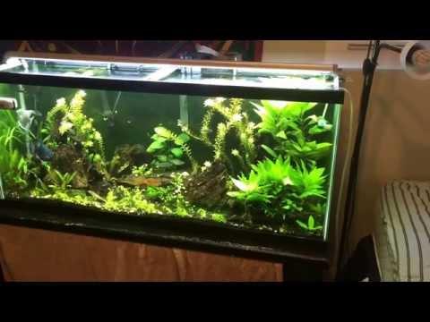 Monte Carlo Plant Care Micranthemum Tweediei
