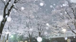 忘却  /  坂本冬美  cover 弾き語り