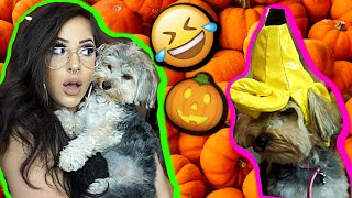 my-dog-tries-on-halloween-costumes
