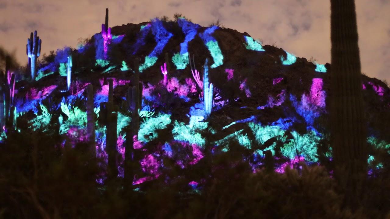 Electric Desert Botanical Garden In Phoenix