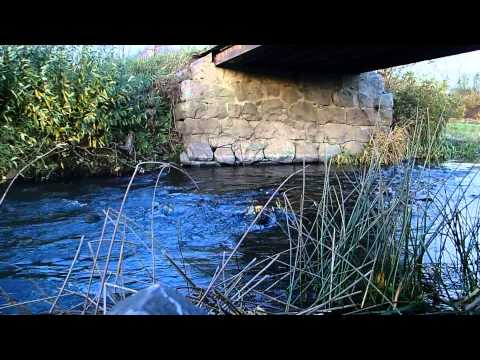 Stream 1 - Most Relaxing Nature Sounds - Creak ripple in Scandinavia