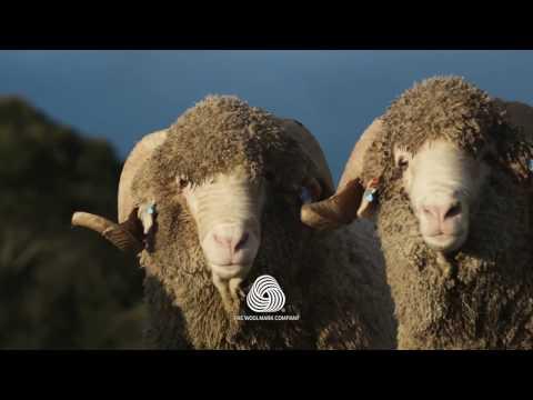 Leichtfried Loden - finest woollen Merino fabrics