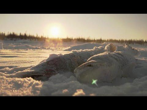 С полем!: «Ей просто холодно. Рыбалка в минус 40».