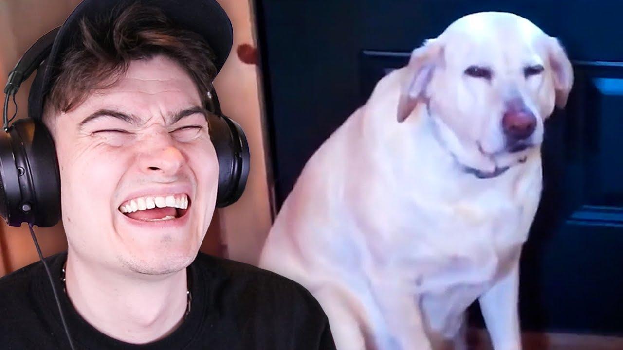 dog videos that make life worth living