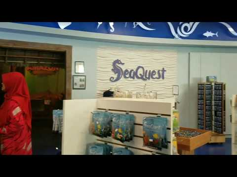 SeaQuest Interactive Aquarium Las Vegas