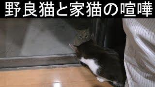 【可愛い】野良猫とみーちゃんの喧嘩、そこには一枚の壁がある、やはり野良猫と家猫だと対決するしか道はないのか… thumbnail