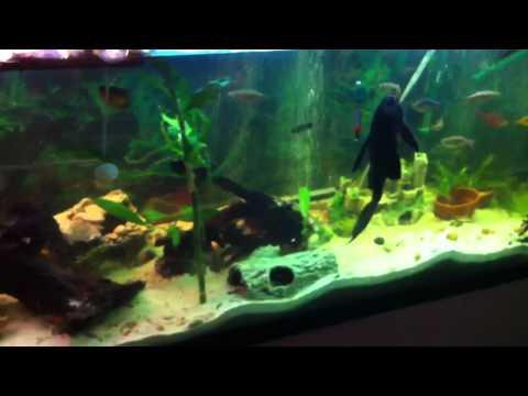 125 gallon diy turtle community tank funnydog tv for Fish tank turtles