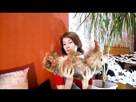 Зубной камень у кошек удаление в домашних условиях