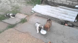 Прикольные щенки