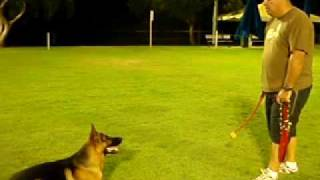 Brisbane Centre For Dogs - Dog Obedience (brett And Tzar)