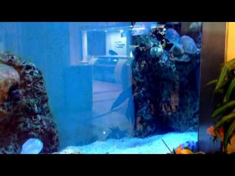 Marine aquarium-Bahrain