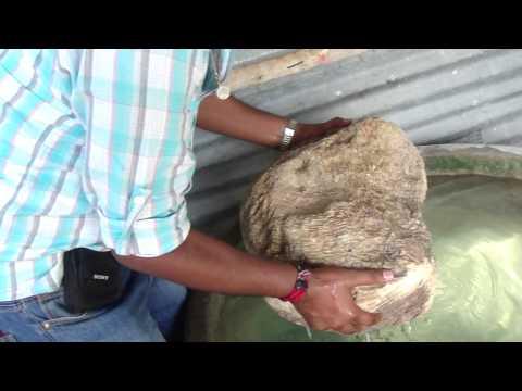 Rameshwaram - Stone used to build the bridge to Sri Lanka
