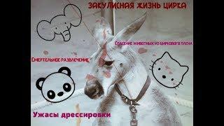 Пора ЗАПРЕТИТЬ ЦИРК и НАСИЛИЕ над ЖИВОТНЫМИ! Закулисная жизнь животных! Оплата мучений животным!