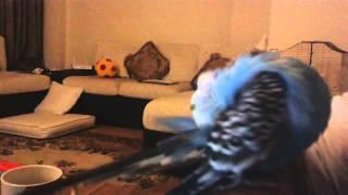 Kuyruğunu Kaşıyan Kuş