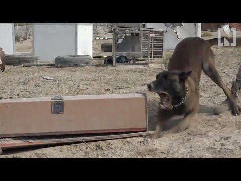 Dubai's police dogs