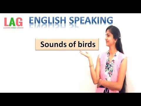 Sounds Of Birds ( पक्षियों की आवाजें ) In English
