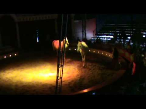 cirque barletti cavalli in liberta nora borissov