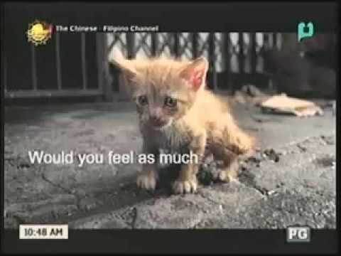 cat and dog sad commercial