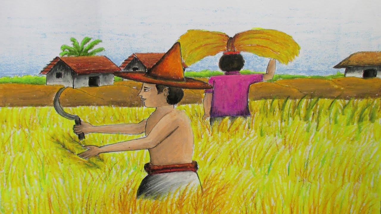 How to Draw a Village Landscape where farmers harvesting paddy on ... for Farm Field Drawing With Color  76uhy