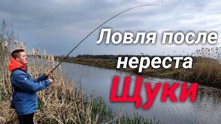 Щука начала клевать Рыбалка на щуку после нереста Спиннинг весной на малой речке