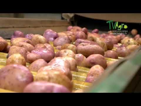 En El Espinal se realizará el segundo ejercicio de comercialización de papa y frijol