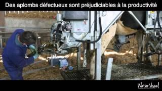 Parage des pieds sabots et onglons de bovin Vache Prim Holstein