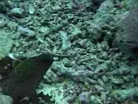 2000 Yap, Micronesia