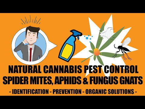 Spider Mites, Aphids & Fungus Gnats - Natural Cannabis Pest Control