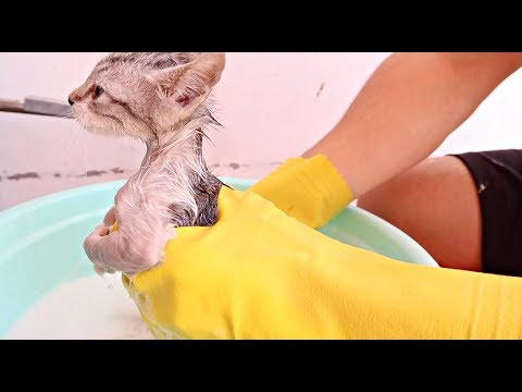 ✰Rescued STRAY KITTEN'S First Ever BATH!✰